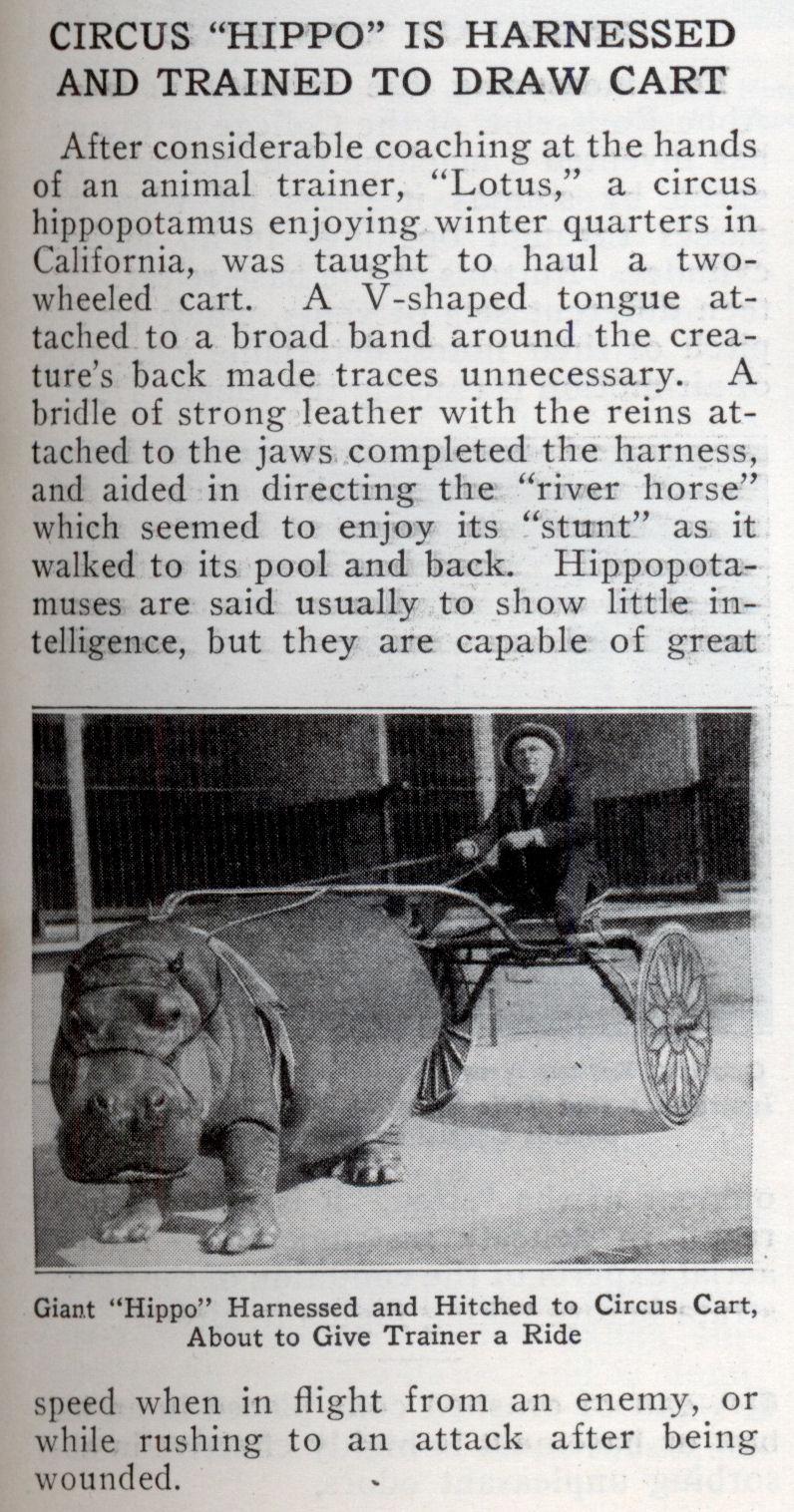 http://blog.modernmechanix.com/mags/PopularMechanics/3-1924/hippo_cart.jpg