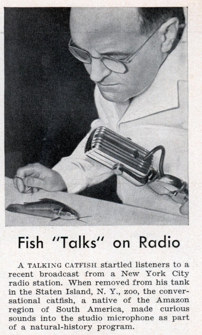 Fish talks on radio modern mechanix for The fish radio