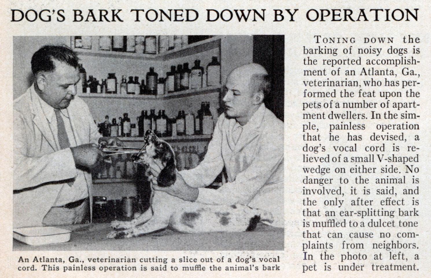 Dog S Bark Is Muffled