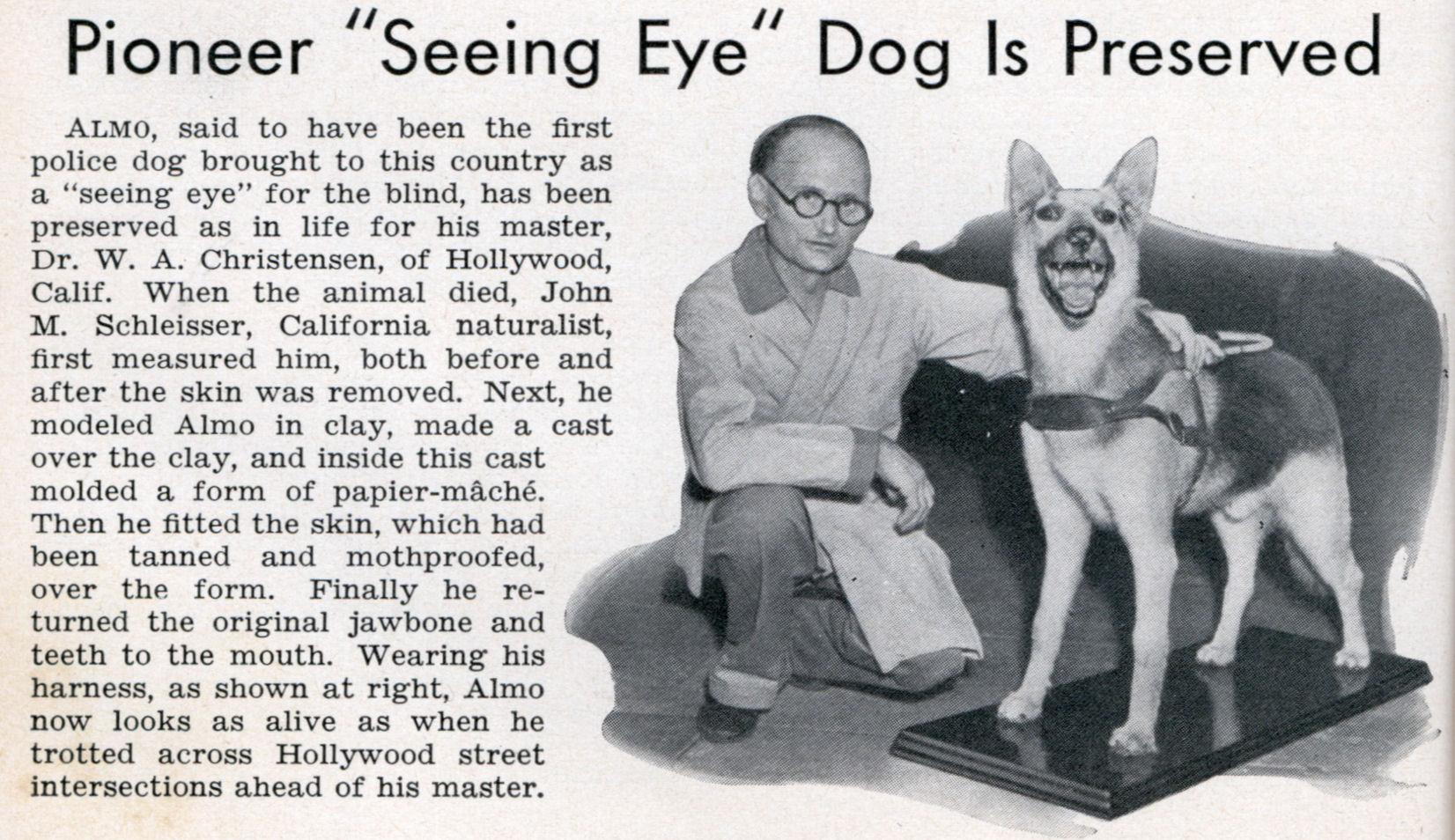 Pioneer Seeing Eye Dog Is Preserved Modern Mechanix