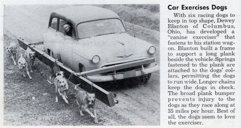car excercises dogs