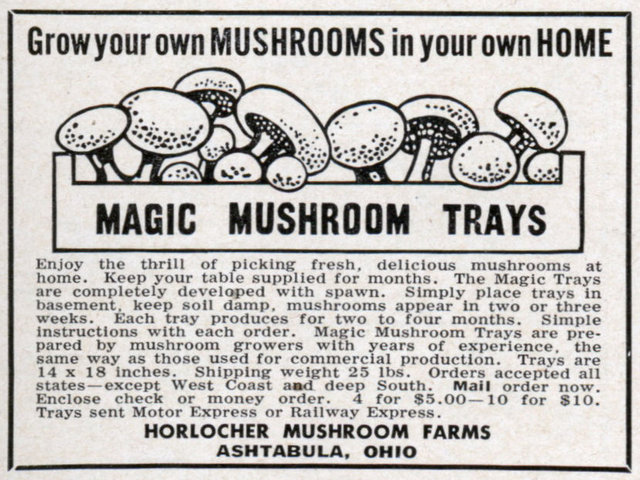 med magic mushrooms HOW TO GROW MUSHROOMS