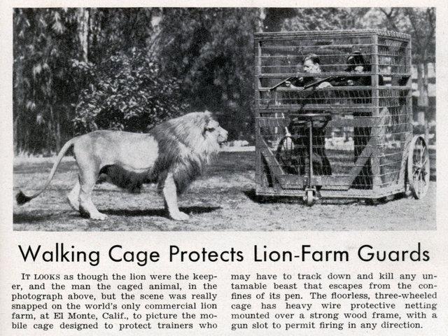 med_lion_cage.jpg